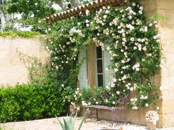 Arbor in Provence, France
