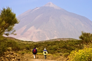 Tenerife: Spain's Botanic Treasure