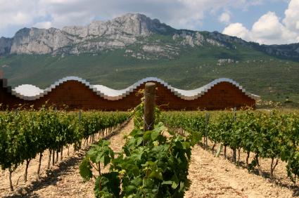 Modern Vineyard in Rioja Region, Spain