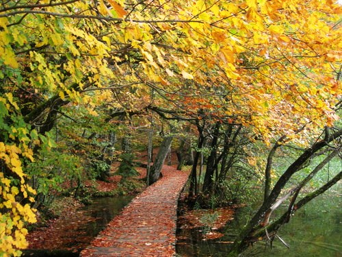 Walkways in Plitvice, Croatia National Park