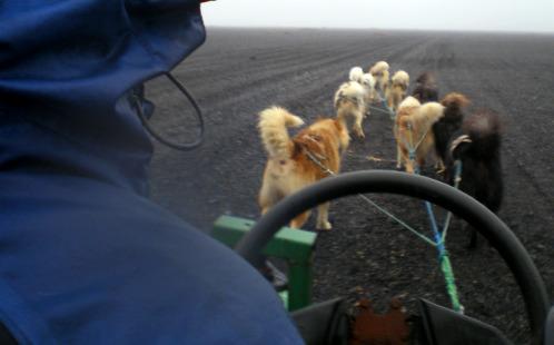 iceland-dog-sledding