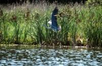 abundant-lakes