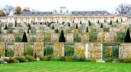 Sanssouci-Vineyards
