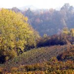 Autum_in_the_Alba_countryside