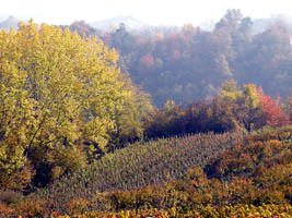 Autumn in the Alba Italy countryside