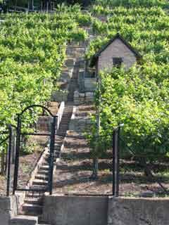 Vineyards_in_Swabia
