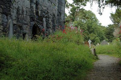 Muckross Abbey - amerune