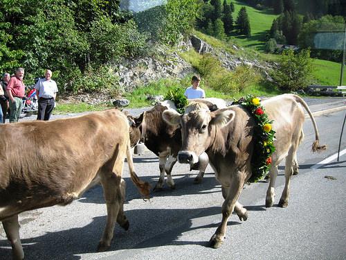 Near Triesenberg in Liechtenstein