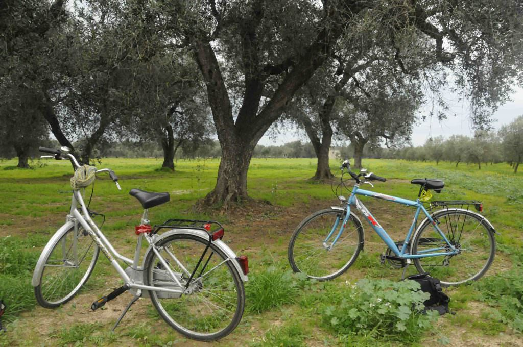 Bicycles and Olive Trees