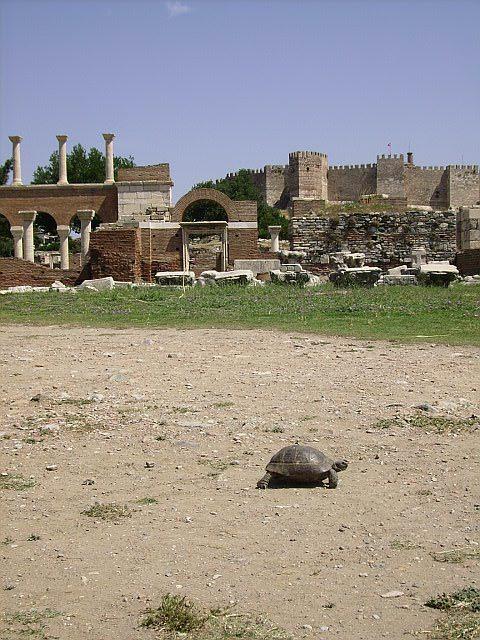 Selcuk Basilica with turtle