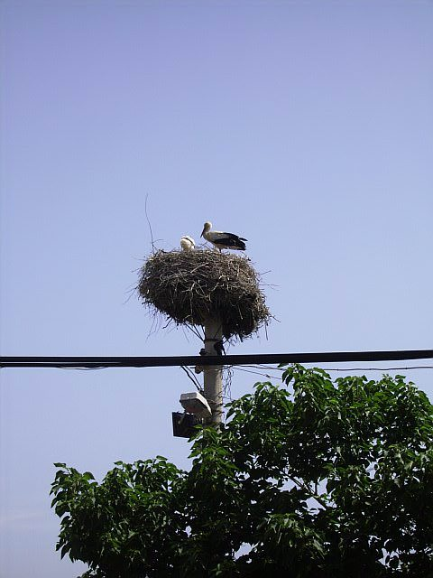 Nesting storks in Selcuk