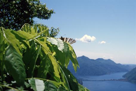Bre  on lake Lugano