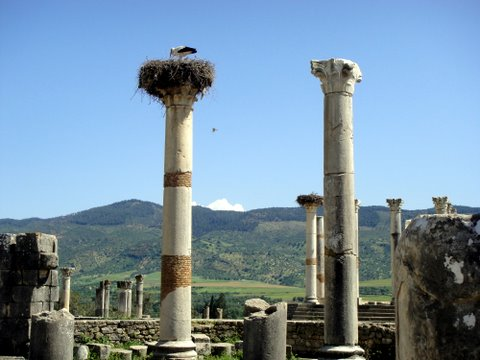 Temple columns, with nesting stork