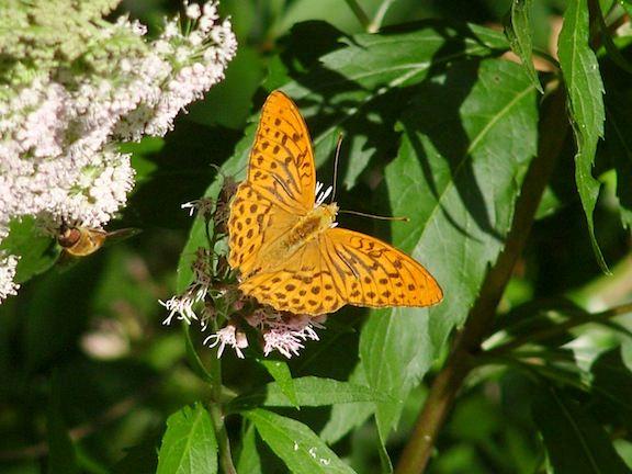 Croatia Plitvice moth
