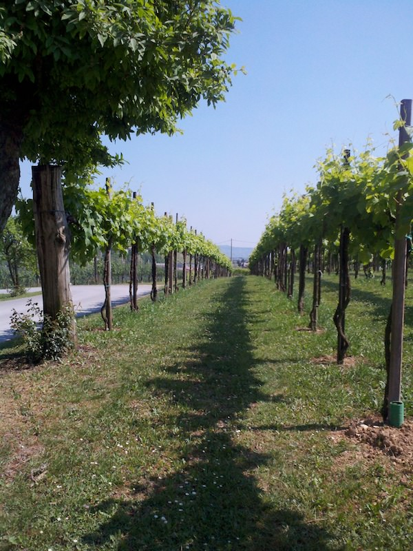a sunny day with beautiful weather at Valdobbiadene Agriturismo Vineyard