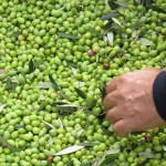 Electric green olives
