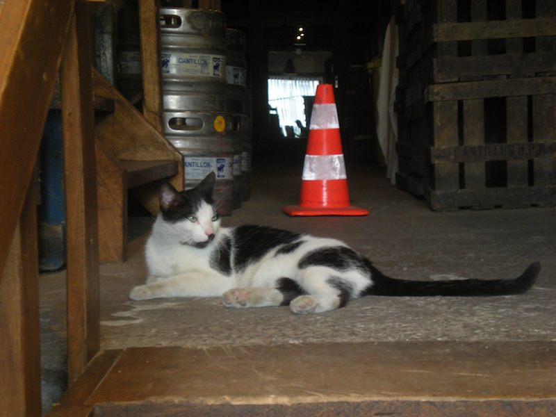 Stray brewery cat