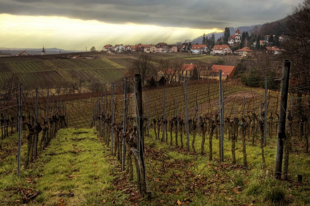 Rhineland-Palatinate by Wolfgang Staudt