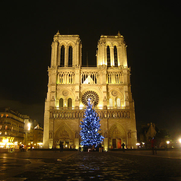 Christmas Tree at Notre Dame