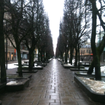Laisvis aleja among the linden trees as it passes through the center of Kaunas
