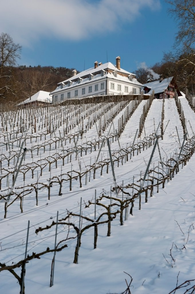 The environment is perfect for pinot, courtesy of Schlossgut Bachtobel Winery