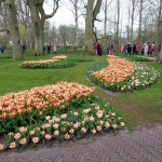 Enjoying a Tulip-Time Cruise in The Netherlands