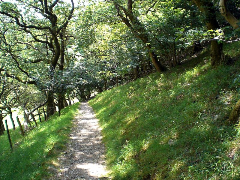 Path to Castell y Bere by Carrie Uffindell