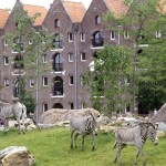 Zebras and Canal Houses. Courtesy of  Artis Zoo
