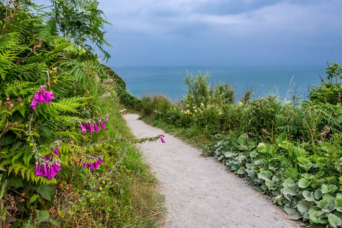 Foxglove and other lush foliage line the WCP on the Ceredigion coast part of the WCP.