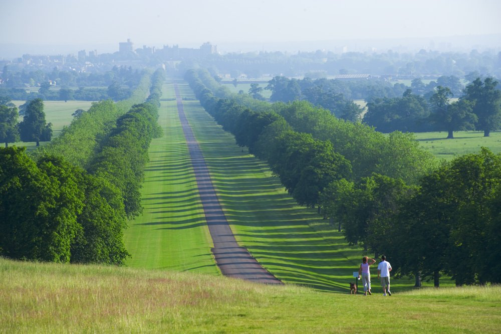 Dog Walkers on the Long Walk with Windsor Castle in the Distance