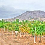 The vineyards