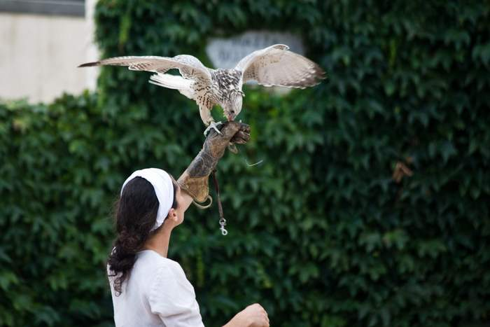 The medieval art of falconry is on display at Solomeo's summer Renaissance Fair. - Cuccinelli communications department