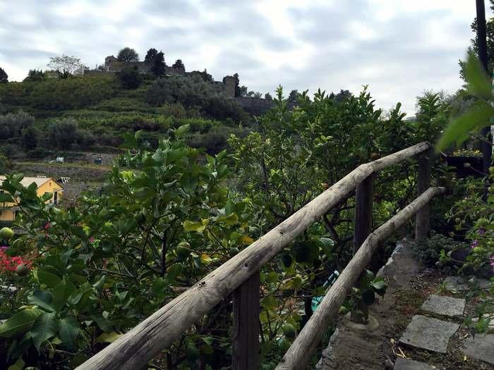 Farming in the Cinque Terre