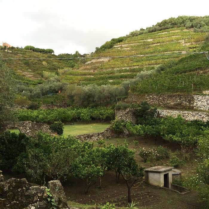 Cinque Terre hillside