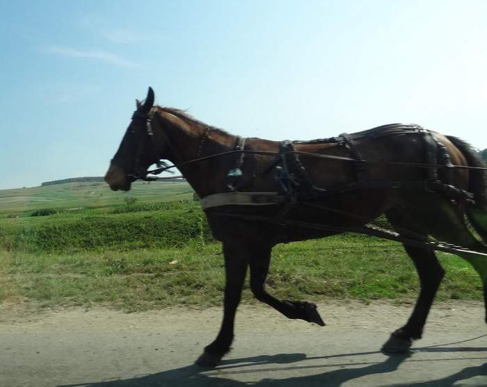 horse and cart in maramures