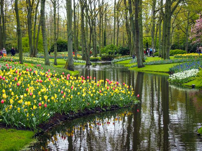 Spring flowers lining a picturesque canal in the keukenhof gardens