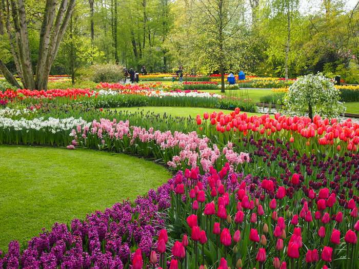 Every imaginable color is represented in the Keukenhof Gardens