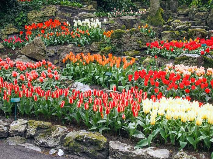 Tulip rock garden, Keukenhof Gardens