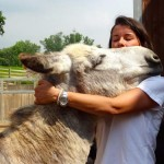 Lots of affection at the Piedmont Donkey Sanctuary