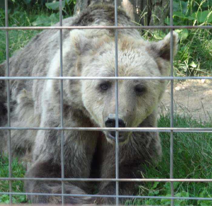 A close encounter with Graeme at the LiBearty Bear Sanctuary