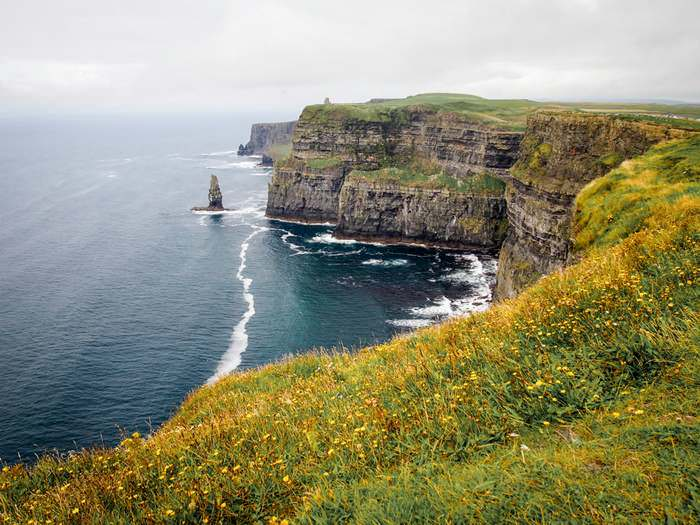 Wildflowers atop the Cliffs of Moher