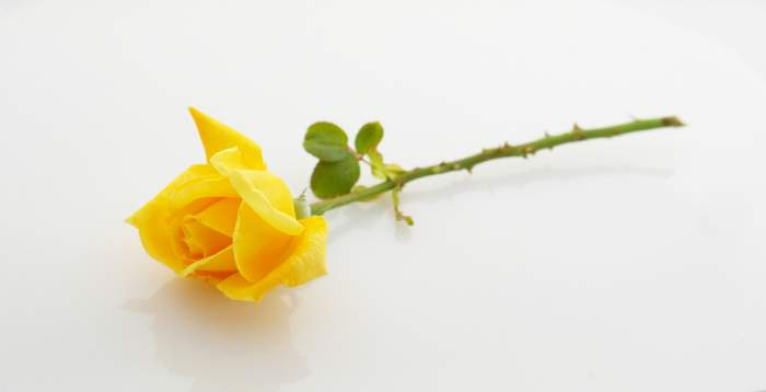 A Yellow Rose for LT Walter Baker buries in Normandy
