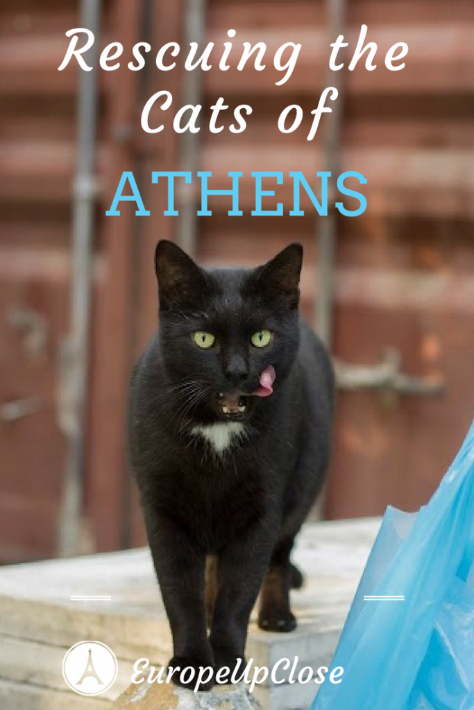 Athens Greece: Cats of Athens - Cat Rescue Nine Lives Organization in Athens Greece